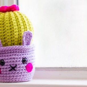 Cactus Bunny 1
