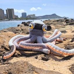 apollo octopus4