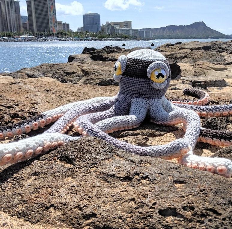 apollo octopus5